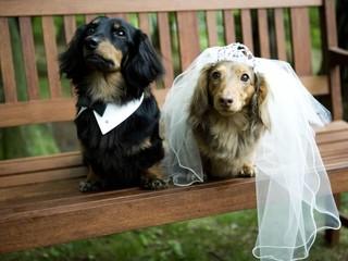 愛するペットも一緒に! 結婚式のペット参加型お …