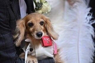 「ローズガーデン新宿」でかなう、愛犬との笑顔あふれるアイデアいっぱいウエディング