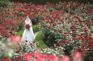 Romantic-Red-Rose_3.jpg