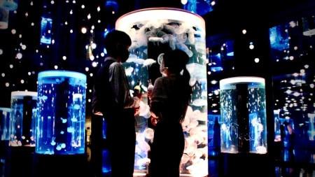 【12月24日(木)貸切!】品川プリンスホテルの1組限定「Premier Christmas ~ふたりだけのナイトアクア~」