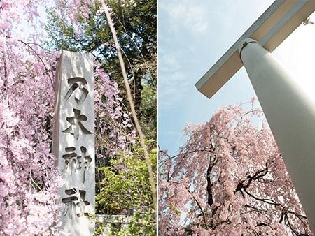 会場見学後のお花見デートに! 満開の桜が楽しめる都心の穴場スポット、期間限定で登場です
