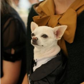 ペットのワンちゃんも特製タキシードで参列