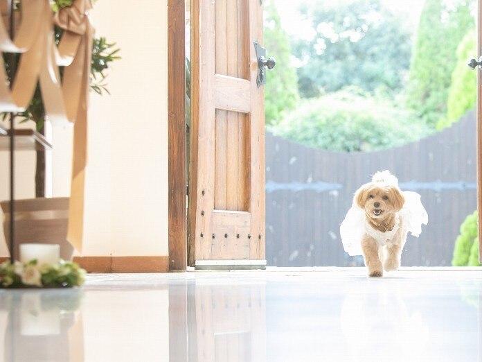 愛犬・ペットと結婚式 リングドッグ