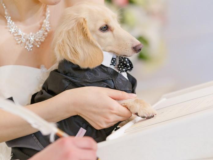 愛犬・ペットと結婚式 結婚証明書