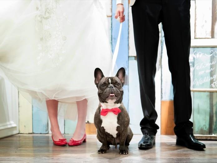愛犬・ペットと結婚式 フォト