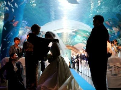 816027781bfe5 思い出の水族館でゲストも楽しめる挙式. MINORU&HITOMI 様ご夫妻 拡大